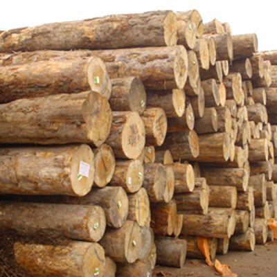 10米油木杆